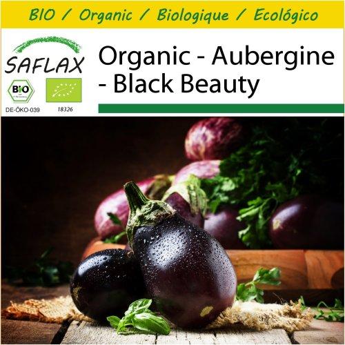 SAFLAX Potting Set - Organic - Aubergine - Black Beauty - 25 certified organic seeds  - Solanum