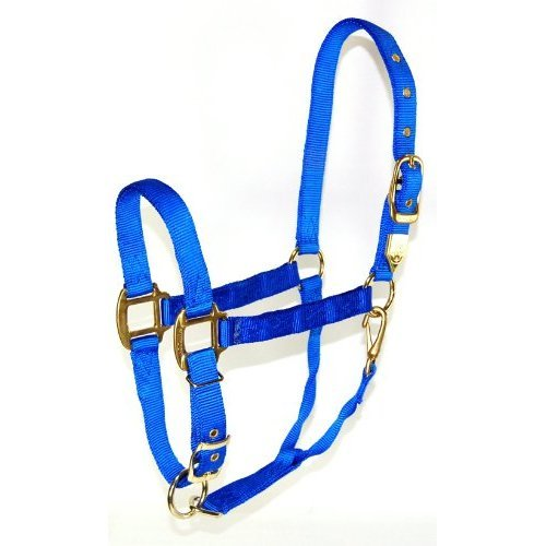 Hamilton 1-Inch Nylon Halter with Adjustable Chin, Blue - Large Size