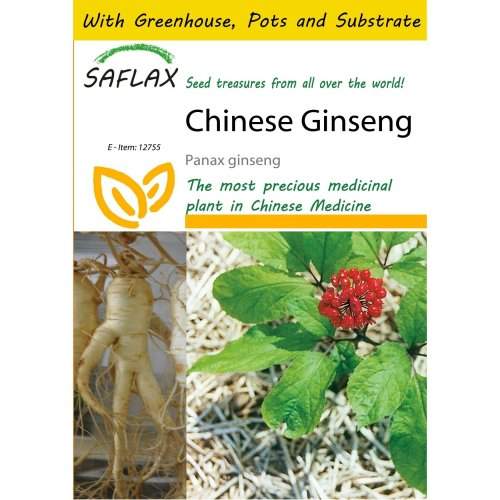 Saflax Potting Set - Chinese Ginseng - Panax Ginseng - 10 Seeds - with Mini Greenhouse, Potting Substrate and 2 Pots
