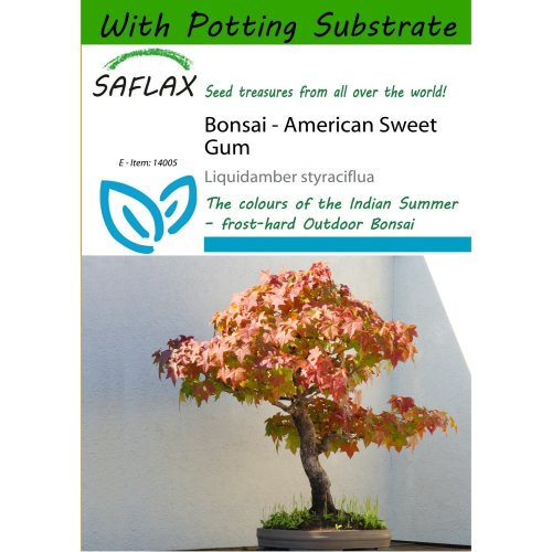 Saflax  - Bonsai - American Sweet Gum - Liquidamber Styraciflua - 99 Seeds - with Potting Substrate for Better Cultivation