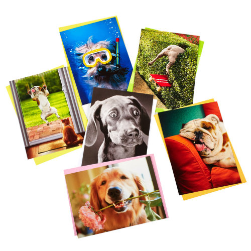 Novelty Birthday Cards For Dog Lovers Pack X 6 On OnBuy
