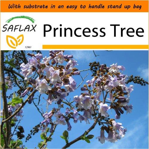 SAFLAX Garden in the Bag - Princess Tree - Paulownia - 200 seeds
