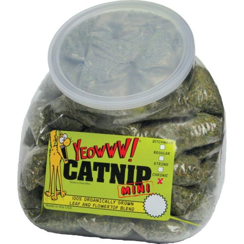 Yeowww Catnip Mini Display Jug (Pack of 50)