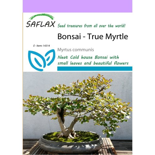 Saflax  - Bonsai - True Myrtle - Myrtus Communis - 30 Seeds