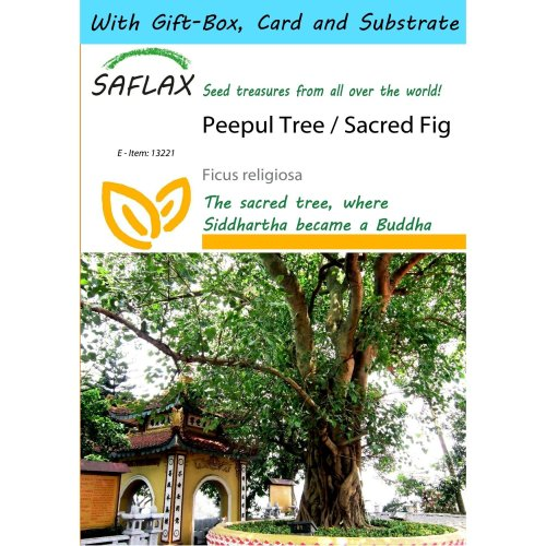 Saflax Gift Set - Peepul Tree / Sacred Fig - Ficus Religiosa - 100 Seeds - with Gift Box, Card, Label and Potting Substrate