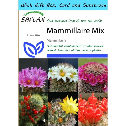 Saflax Gift Set - Mammillaire Mix - Mammilaria Mix - 40 Seeds - with Gift Box, Card, Label and Potting Substrate