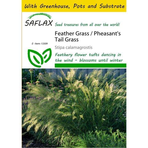 Saflax Potting Set - Feather Grass / Pheasant's Tail Grass - Stipa Calamagrostis - 50 Seeds - with Mini Greenhouse, Potting Substrate and 2 Pots