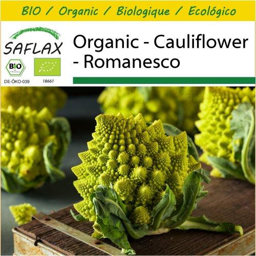 SAFLAX Potting Set - Organic - Cauliflower - Romanesco - 50 certified organic seeds  - Brassica