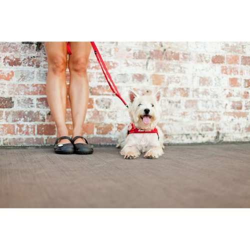 EzyDog Quick Fit Harness Red XS