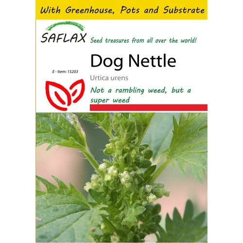 Saflax Potting Set - Dog Nettle - Urtica Urens - 150 Seeds - with Mini Greenhouse, Potting Substrate and 2 Pots