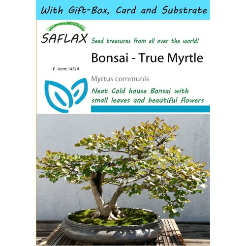 Saflax Gift Set - Bonsai - True Myrtle - Myrtus Communis - 30 Seeds - with Gift Box, Card, Label and Potting Substrate