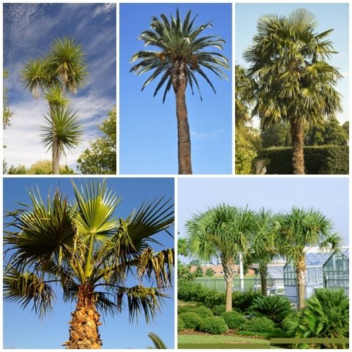 RP Seeds Palm Tree Seed Collection