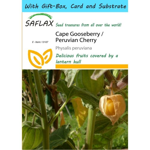 Saflax Gift Set - Cape Gooseberry / Peruvian Cherry - Physalis Peruviana - 100 Seeds - with Gift Box, Card, Label and Potting Substrate