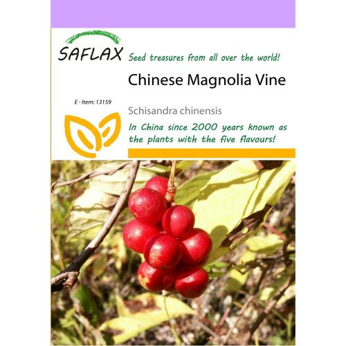 Saflax  - Chinese Magnolia Vine - Schisandra Chinensis - 15 Seeds